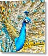 Peacock Paradise Metal Print