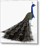 Peacock Profile Metal Print