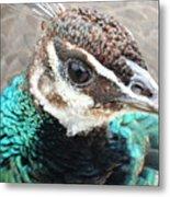 Peacocks Eye View Metal Print