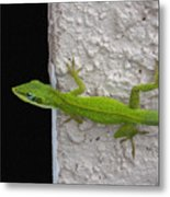Peaking Lizard Metal Print