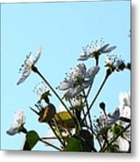 Pear Tree Blossoms 5 Metal Print