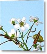Pear Tree Blossoms 6 Metal Print