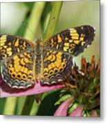 Pearl Crescent Butterfly On Coneflower Metal Print