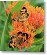 Pearly Crescentspot Metal Print