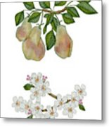 Pears And Pear Blossoms Metal Print