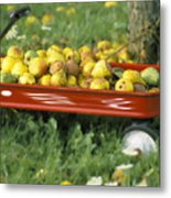 Pears In A Wagon Metal Print by Gordon Wood