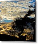 Pebbles Beach Pine Tree Metal Print