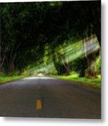 Pecan Alley Rays - Arkansas - Landscape Metal Print