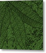 Pecan Tree Leaves Metal Print