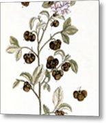 Peco Tea, 1735 Metal Print