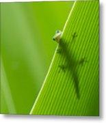 Peek A Boo Gecko Metal Print