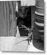 Peeking Count Metal Print
