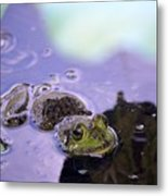 Peeking From The Pond Metal Print
