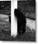 Peeking Kitty Black And White Metal Print