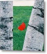 Peeking Tulip Metal Print