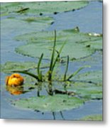 Peeking Up Metal Print