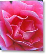 Peggy Lee Rose Bridal Pink Metal Print