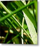 Pei Grass - Bottom Metal Print