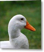 Pekin Duck 20120507_142 Metal Print