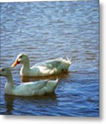Pekin Ducks 20120515_15 Metal Print