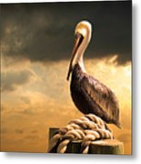 Pelican After A Storm Metal Print