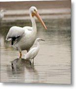 Pelican And Snowy Egret 6459-113017-1cr Metal Print