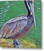 Pelican By The Pier Metal Print