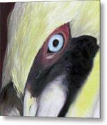 Pelican Closeup 1 Metal Print