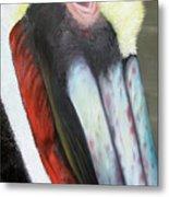 Pelican Closeup 2 Metal Print