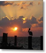 Pelican Dawn Metal Print
