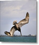 Pelican Diving For Dinner Metal Print