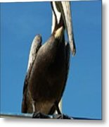 Pelican Dreams Metal Print