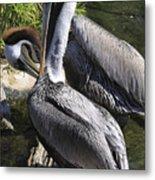 Pelican Duo Metal Print