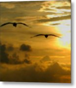 Pelican Flight Into The Clouds Metal Print
