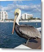 Pelican -florida Metal Print