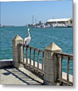 Pelican Gazing At Port Canaveral In Florida Metal Print