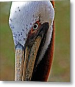 Pelican Head Metal Print