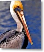 Pelican Head Shot Metal Print