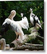 Pelican Hideaway Metal Print