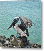 Pelican In Aruba Landing On Lava Rock Metal Print