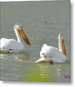 Pelican In Colorado Metal Print