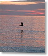 Pelican In Flight At Dawn Metal Print