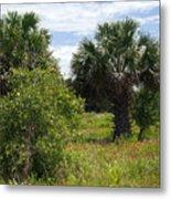 Pelican Island Nwr In Florida Metal Print