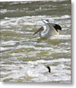 Pelican Landing And Cormorants Metal Print