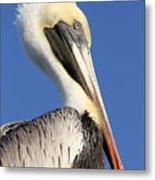 Pelican Mohawk Metal Print