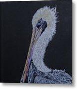 Pelican On Black Metal Print