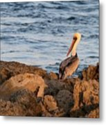 Pelican On The Rocks Metal Print
