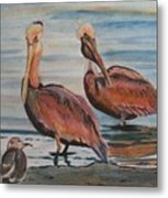 Pelican Party Metal Print