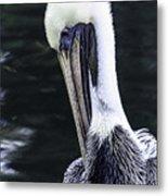 Pelican Profile Metal Print