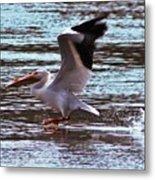 Pelican Skimming The Rock River Metal Print